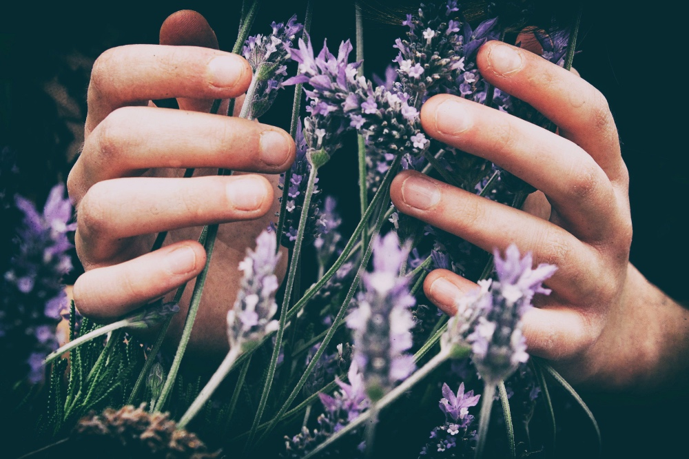 hands a lavender